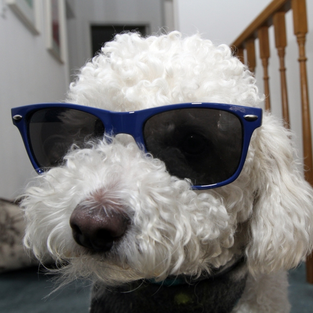 JImmy Glasses
